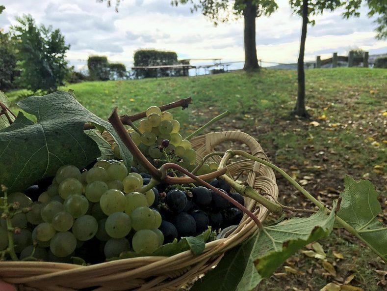 Picknick in den Weinbergen rund um Hessigheim