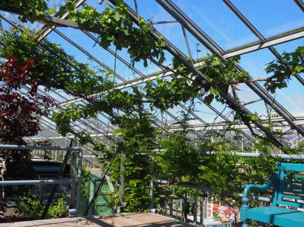 Tulpenblüte in Holland erleben: Abseits vom Keukenhof