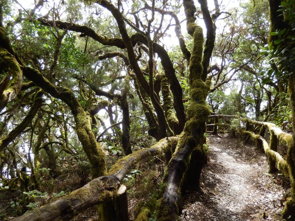 La Gomera: Wandern an mystischen Orten und in faszinierender Natur