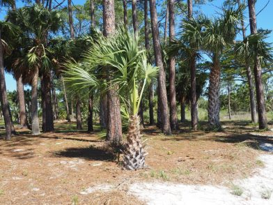 Mein Roadtrip auf dem Highway US 98 und der Forgotten Coast® in Florida