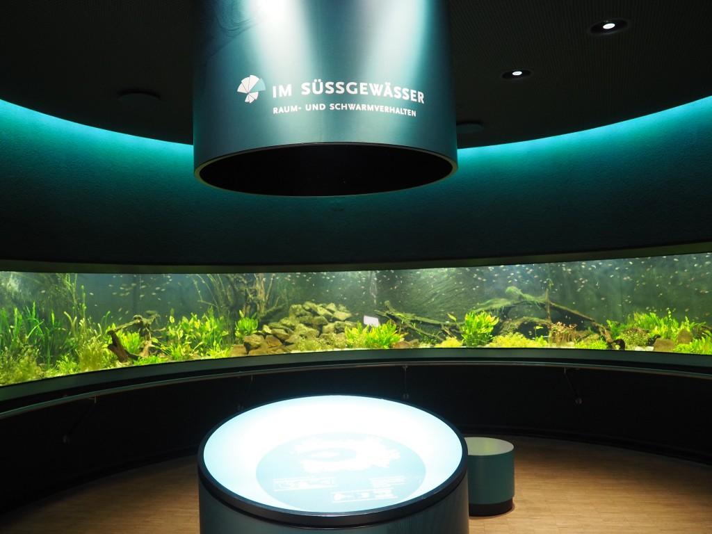 Mit der DüsseldorfCard kostenlos, das Löbekke Aquarium