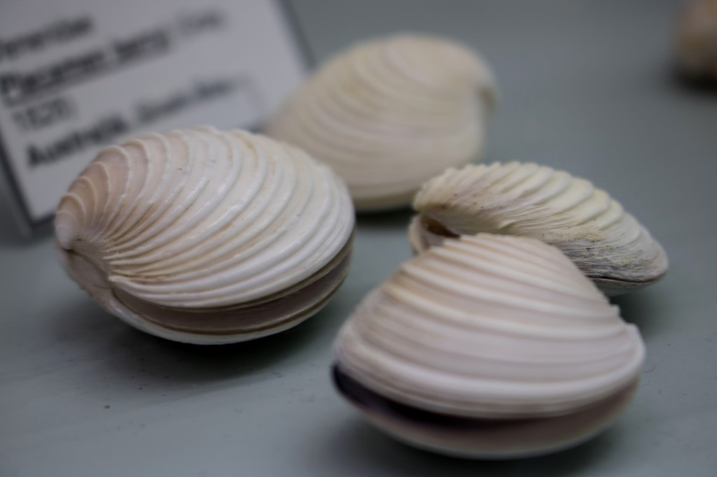Muschelmuseum Schiermonnikoog