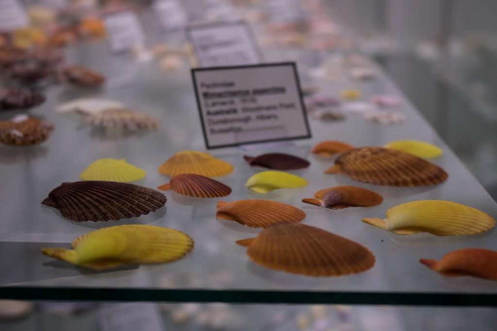 Schelpenmuseum Schiermonnikoog