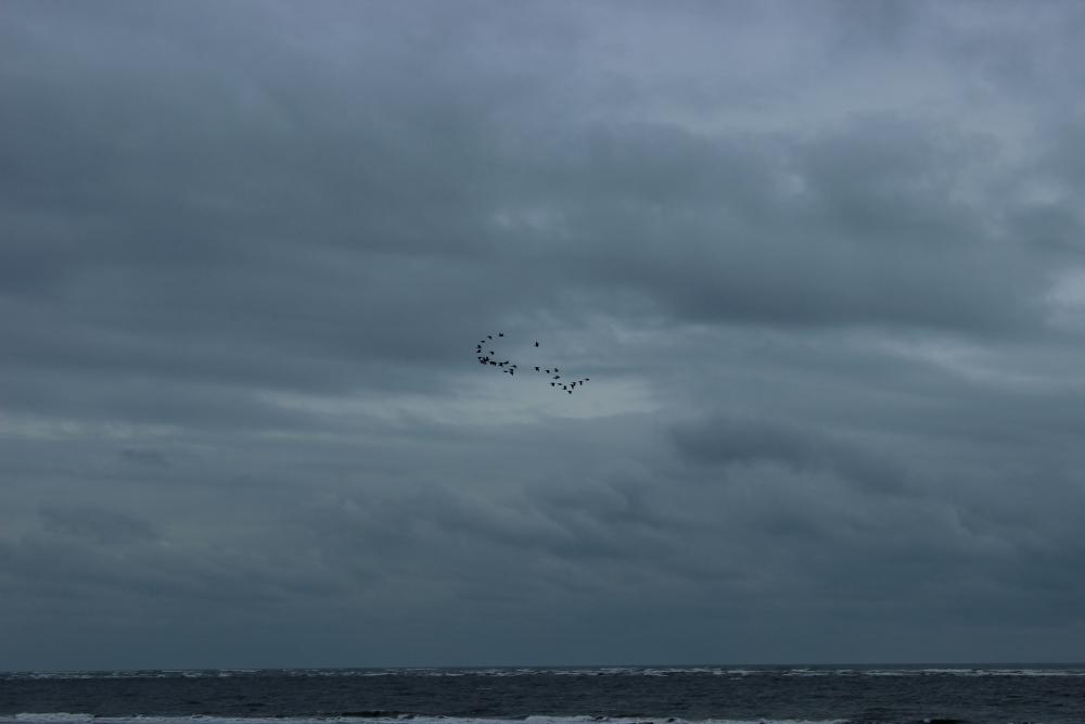 Vögel Schiermonnikoog