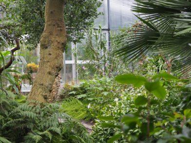 Botanische Gärten mit Gewächshäusern in Deutschland - Eine Übersicht