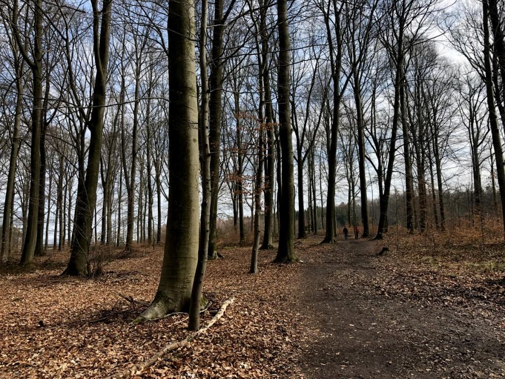 Die perfekte Osterwanderung. Spaziergang durch Narzissen in Kelmis