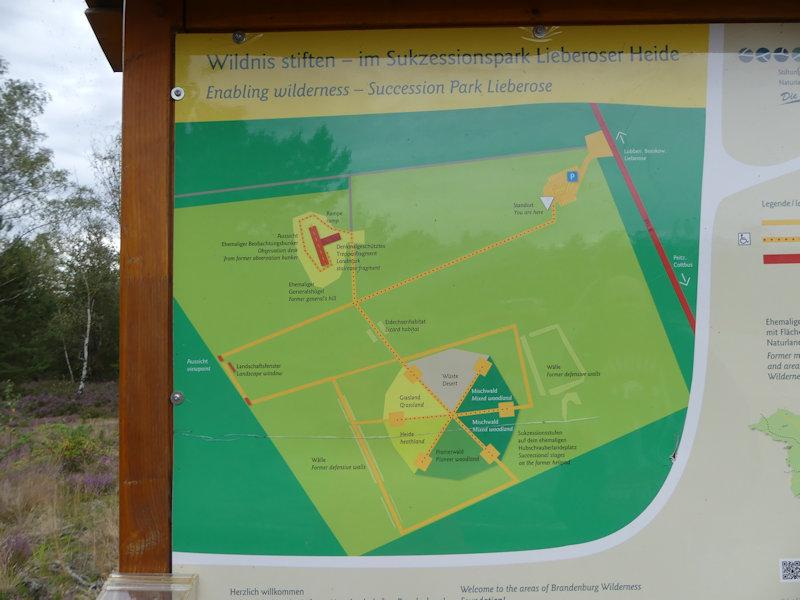 Eine kleine Aussicht im Sukzessionspark Lieberoser Heide