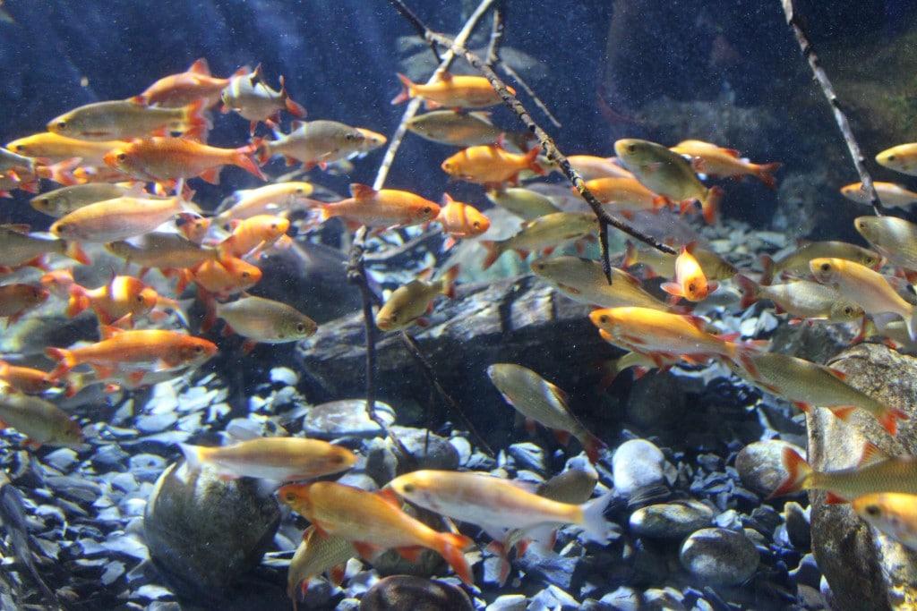 SEA LIFE Konstanz - Fische und andere Meeresbewohner ganz nah