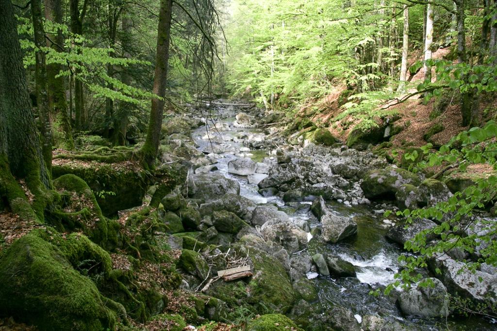 Ein Wochenende im Bayerischen Wald