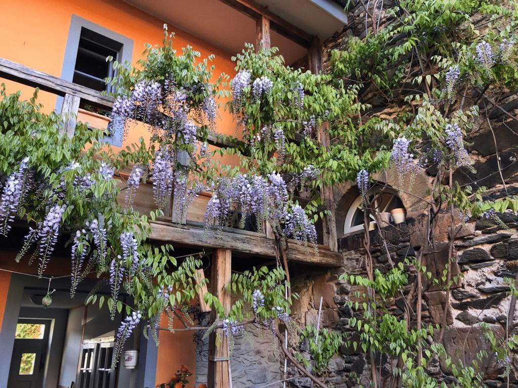 Stadtmauer Cafe Sieben Weida