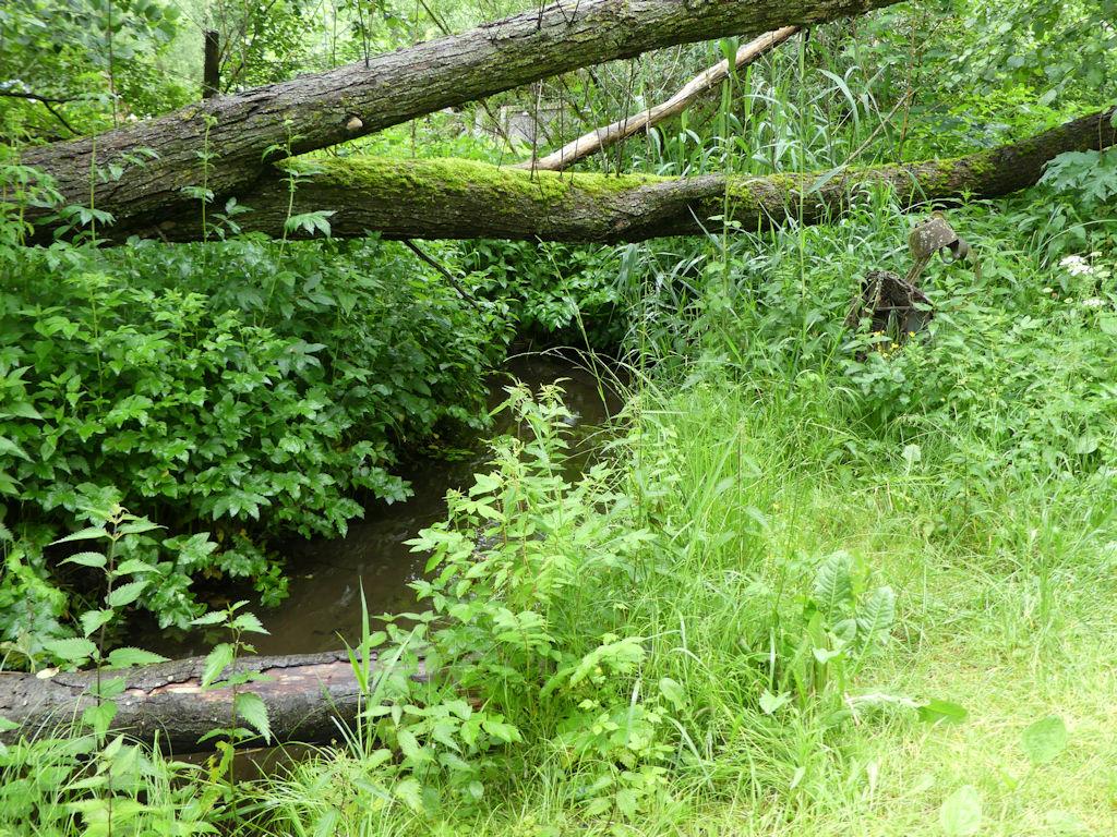 Wildpark Bach