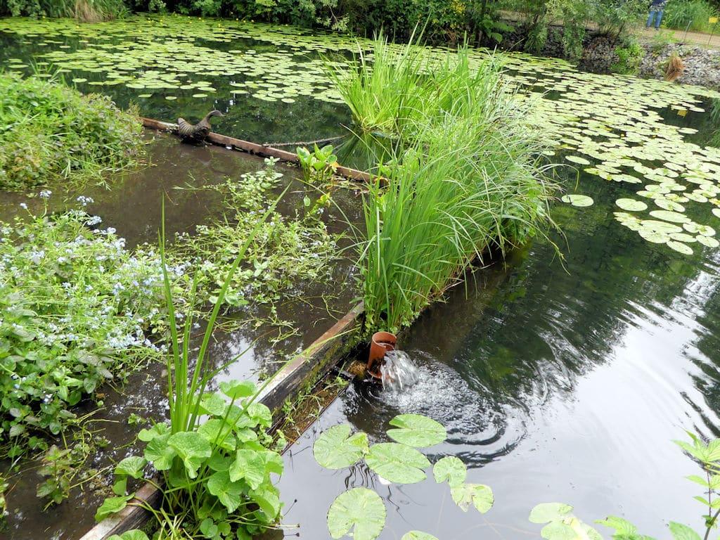 Wildpark Teich