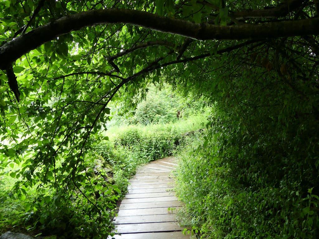 Wildpark Weg