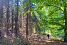 Mein Freund der Baum. Über Waldsterben und Perspektiven für den Wald