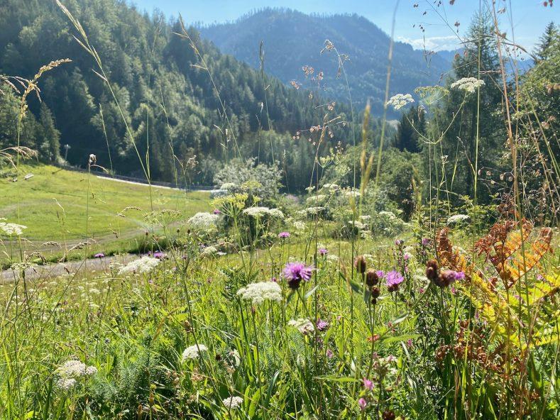 Ein Wochenende am Weißensee in Kärnten