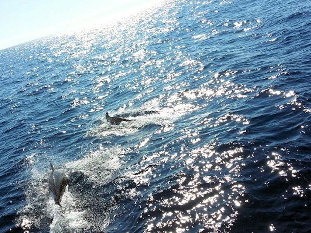 Delfine Italien