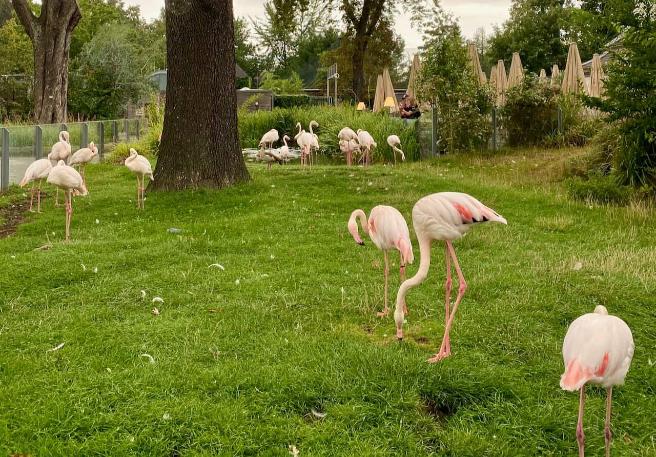 Tierpark + Fossilium Bochum Flamingos
