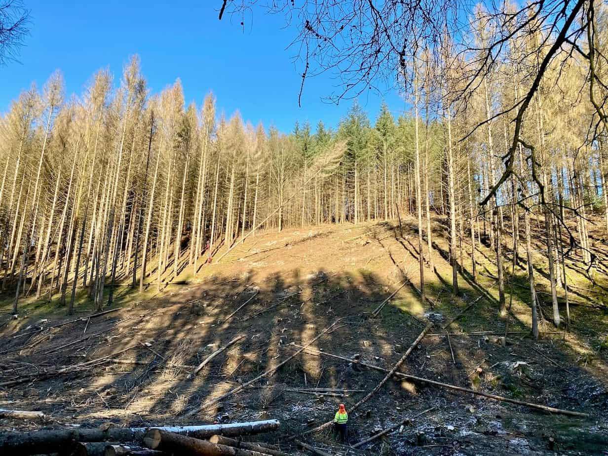 Baumfällarbeiten im Bergischen Land
